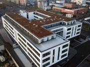 Gründach,  Extensive Dachbegrünung